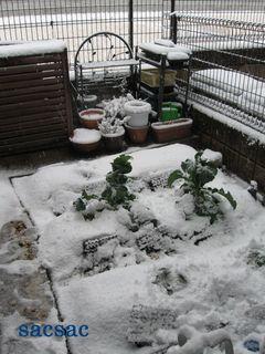 217カリフラワー雪.jpg